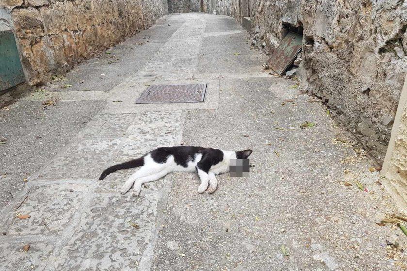 Reagiranje Općine Konavle na trovanje životinja u Cavtatu