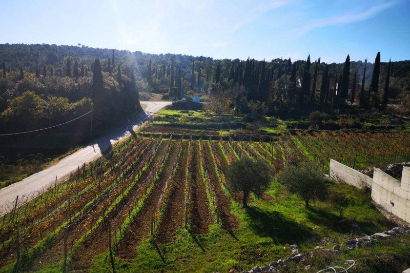 e-SJEDNICA OPĆINSKOG VIJEĆA: Usvojen Program mjera u poljoprivredi i ruralnom razvoju Općine Konavle